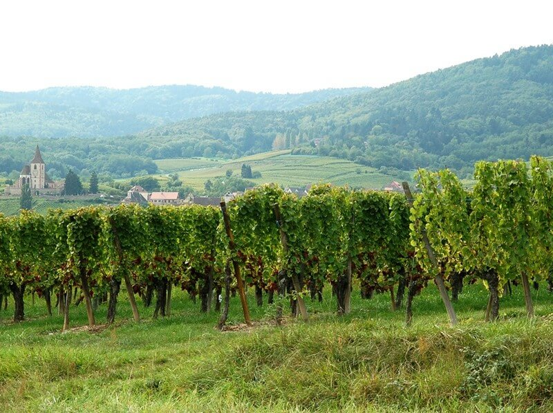 alsace-somewhere-along-the-wine-road-credit- ilovebutter-flic.kr-p-pVXFc6-gi